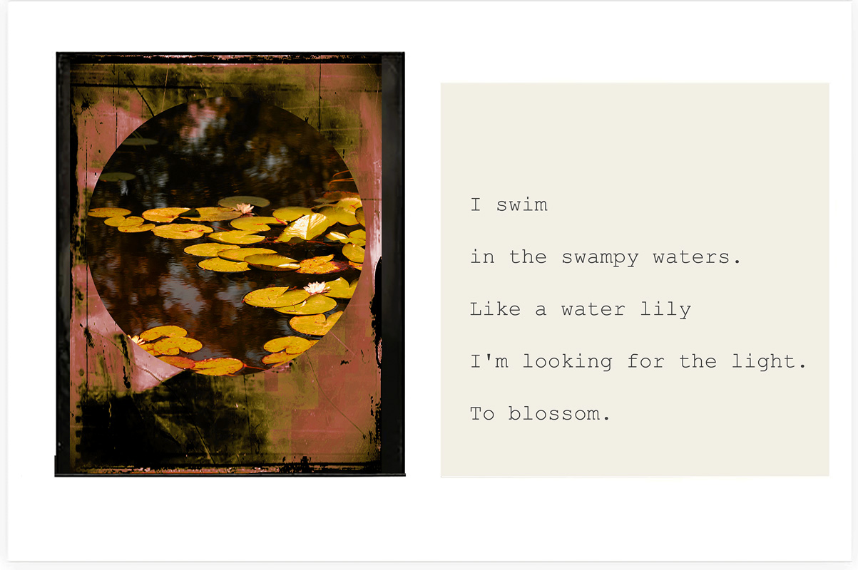 Like a water lily